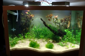 Aquarium with LED lighting